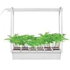 Светодиодный светильник для растений (UL-00004149) Uniel Minigarden ULT-P34-10W/SPSB IP40 White 12